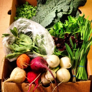 Woodside ranch restarts produce-delivery service | News